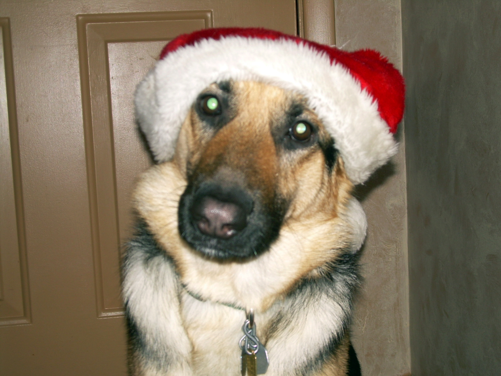 ho ho ho its german shepherd santa