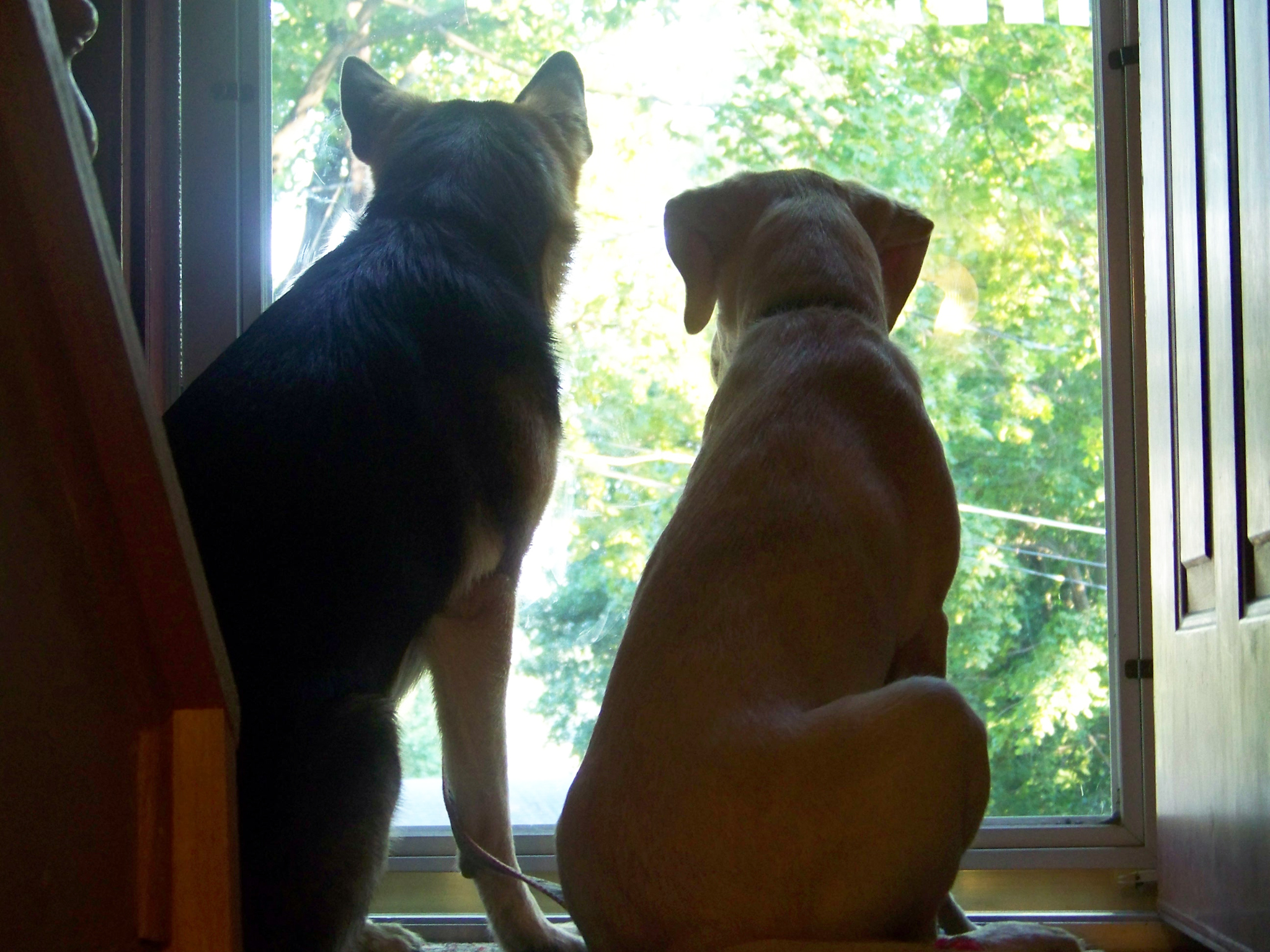 the back side of the door as german shepherd Oprah and yellow lab Haiku watch out of it